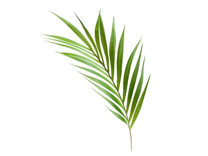 Torre & Tagus Palm Leaf Stem - Vase Filler