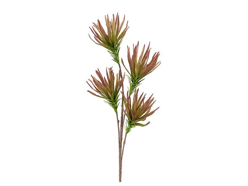 Torre & Tagus Desert Fringe Ruby Papyrus 99cm Stem - Perfect vase filler